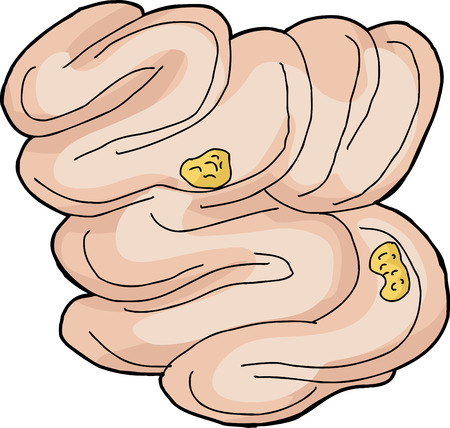 Isolated hand drawn human small intestine with food pieces Illustration