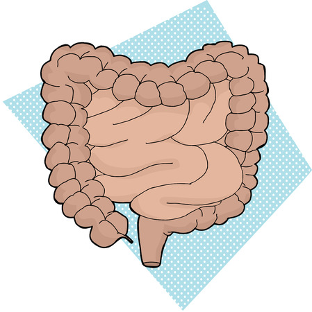 small intestine: Hand drawn cartoon human digestive tract over blue