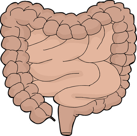 Isolated cartoon human digestive tract over white background
