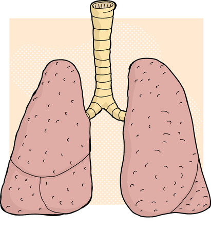 Hand drawn cartoon human lungs close up