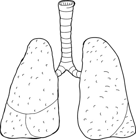 trachea: Hand drawn outline of human lungs and trachea