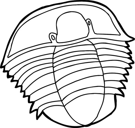 Outline of ancient trilobite fossil drawing over white Çizim
