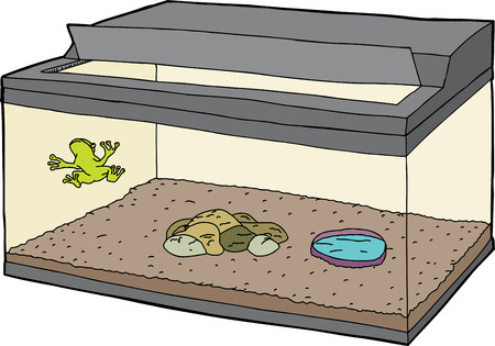 Green frog in fish tank with open lid