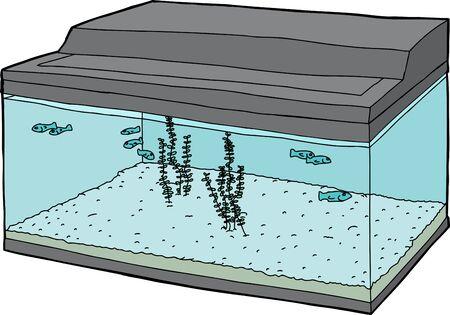 tank fish: Tiny fish swimming inside fish tank over white