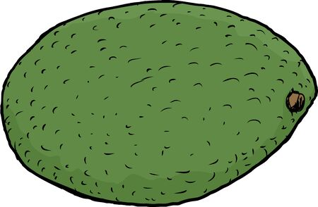 sketch out: Hand drawn single avocado fruit illustration over white