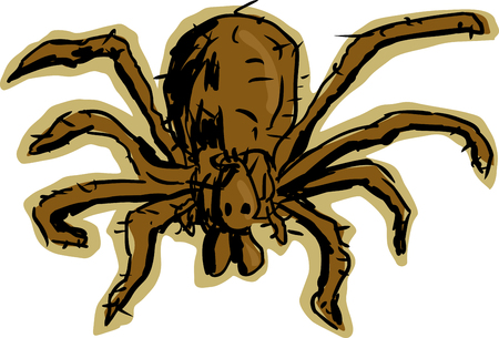 hobo: Close up top down view of brown, hairy hobo spider over white background