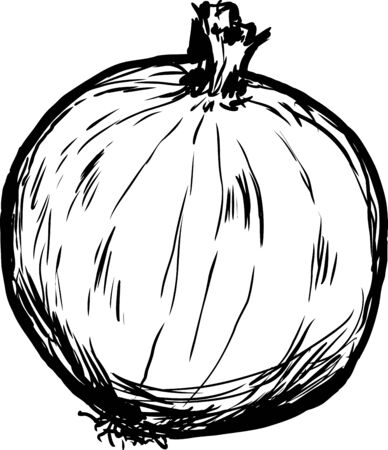 sketch out: Outline sketch of single whole raw onion cartoon over white background
