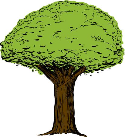 白い背景の上に太い幹と緑の木のスケッチ