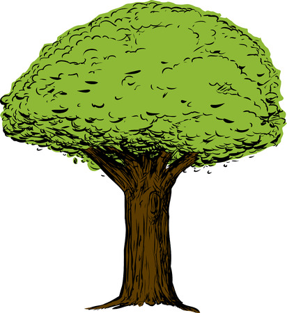 Sketch of green tree with thick trunk over white background