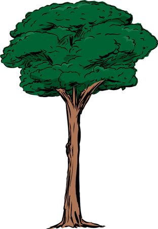 tall tree: Illustration of single tall dark green tree over isolated white background Illustration