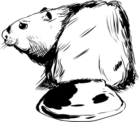 rear view: Outline drawing of rear view of single beaver with long wide tail Illustration