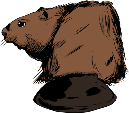 Illustration of rear view of single brown beaver with long wide tail
