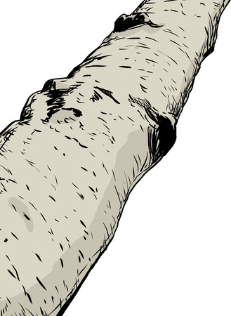 Close up illustration on part of birch tree trunk over white