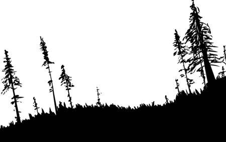 iluminado a contraluz: Retroiluminado ilustración de arbolado forestal sueca de ángulo bajo como fondo de la naturaleza