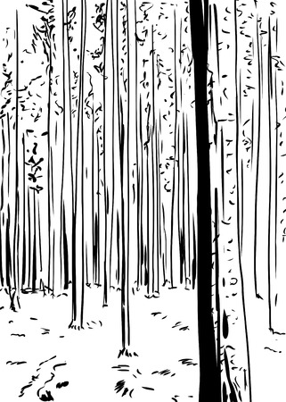 wilderness: Outlined freehand illustration of forest wilderness background with tall trees Illustration