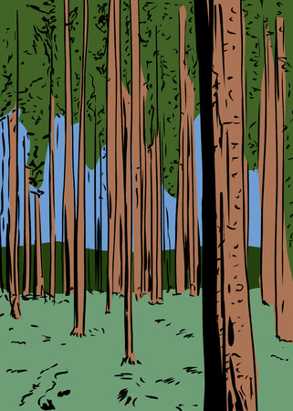 tall trees: Illustration of forest wilderness background with tall trees Illustration