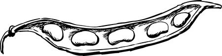 Outlined illustration of fresh beans in open pod.
