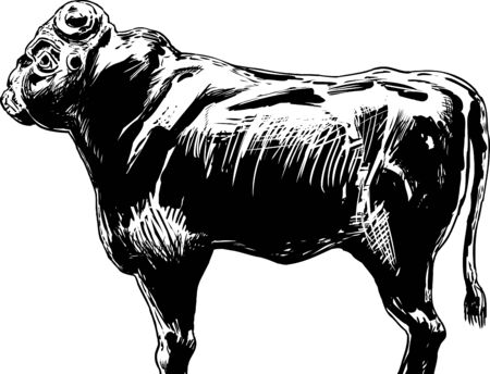 Partially reconstructed ancient black stone bull idol representing the Akkadian King of the Gods