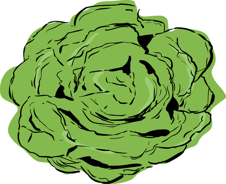 Top down view on large open head of bibb lettuce over white Stock Illustratie