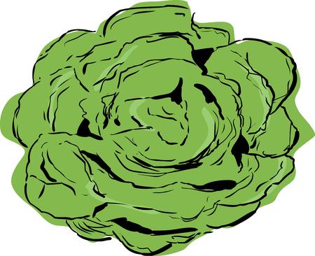 Top down view on large open head of bibb lettuce over white Illustration