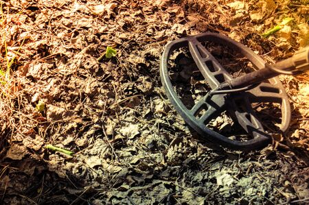 coil of metal detector on the background of fallen leaves in the forest