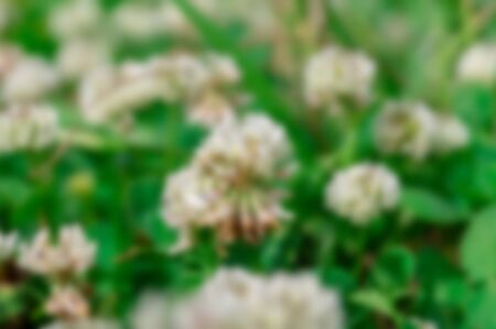 Abstract nature background with blurry bokeh defocused.