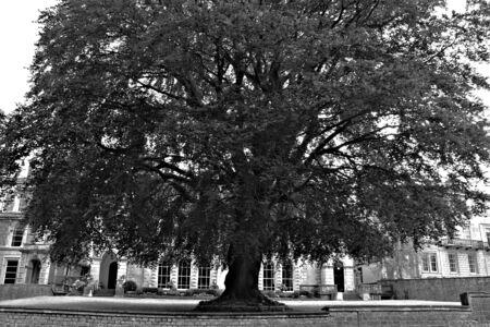 large tree: large tree Stock Photo