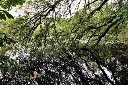 british isles: reflecting branches