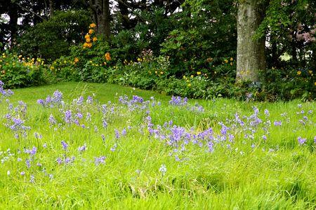 british isles: bluebells Stock Photo