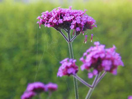 small purple flower: purple flower Stock Photo