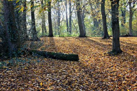 glades: autumn