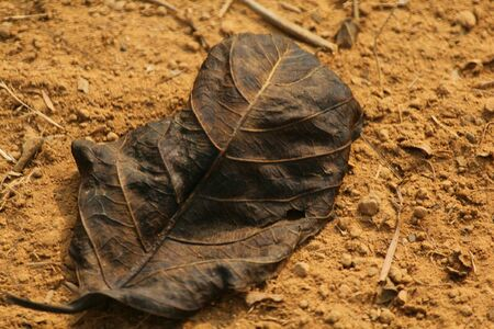 artistic: a withered leaf on ground Stock Photo