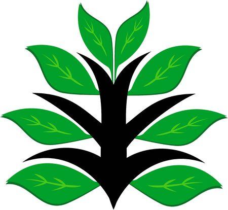 Gezonde groene plant