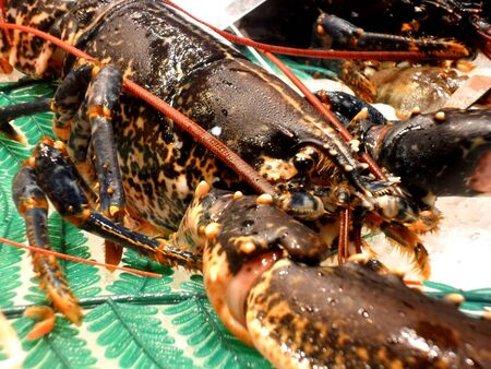 expensive food: Blue and red live lobster at La Boqueria market, Barcelona,