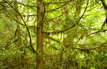 Forest setting with tree and web of branches Stock Photo - 1440752