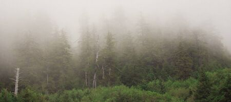 underbrush: Forest covered in fog Stock Photo