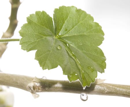 Water dripping off leaf Stock Photo - 2298288