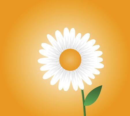 Illustration of daisy with orange background