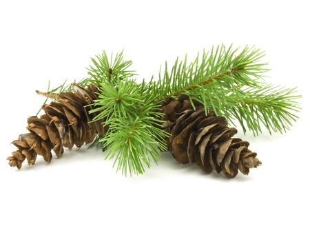 Pine cones with branches on white background