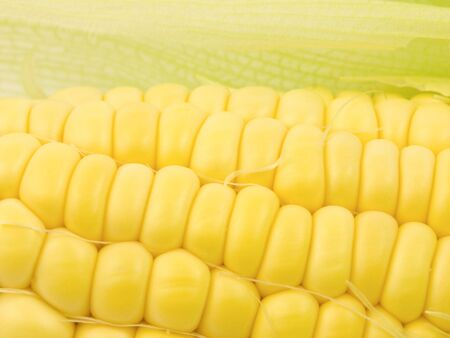 Corn Kernals Close up with open husk Imagens