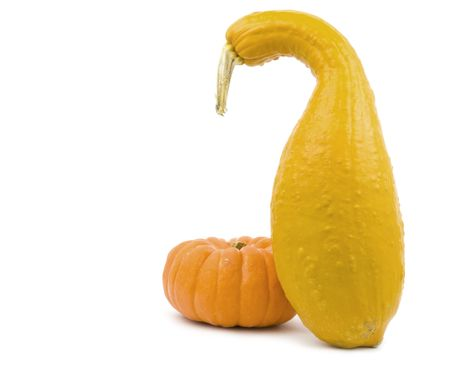 Squash and pumpkin on a white background Imagens