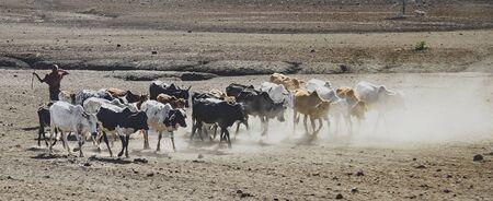 Masai shepperd