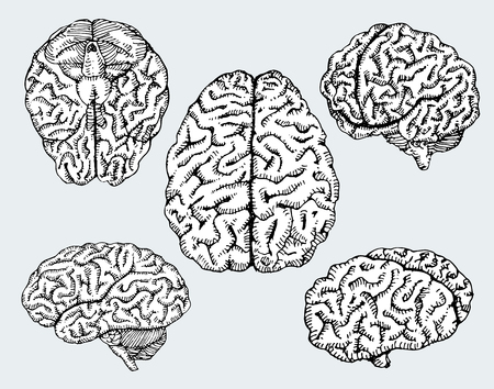 Hand drawn human brains. Vector illustration.  イラスト・ベクター素材