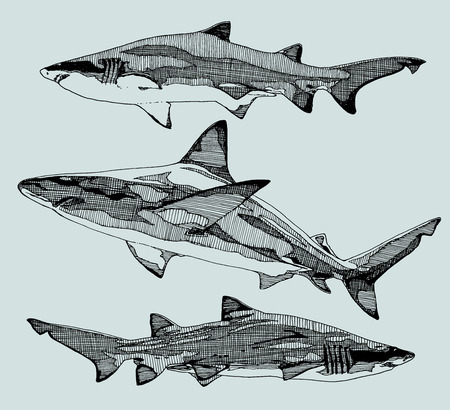 Hand drawn sharks. vector illustration.