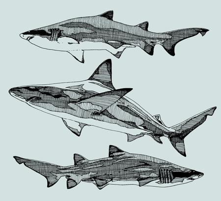 animalistic: Hand drawn sharks. vector illustration.