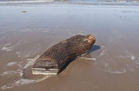 weston super mare: A piece of drift wood on Weston Super Mare beach
