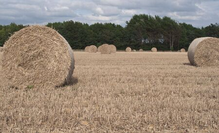 A field of Round Hay bales waiting for the tractor to arrive...