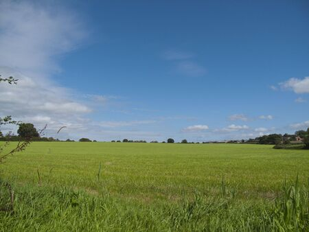 A wondeful Green Field with a blue sky Stock Photo - 5432331