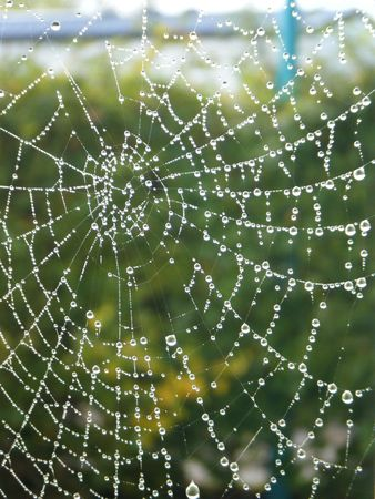 a spider web with some water droplets early in the morning