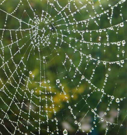spiderweb: a spider web with some water droplets early in the morning